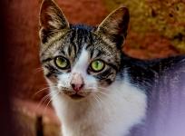 Cat @ Rabat